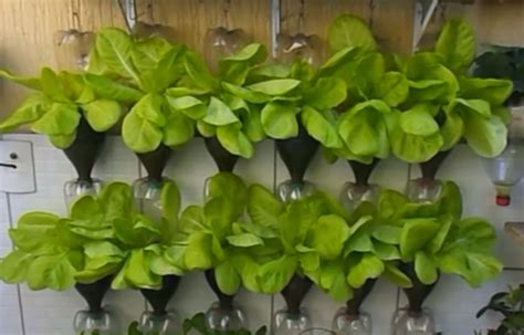 plants   grown  plastic bottles slick garden