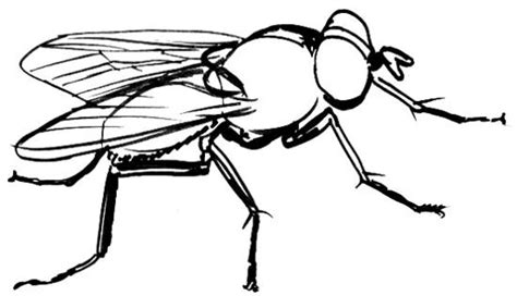 how much to fly a how to draw a fly