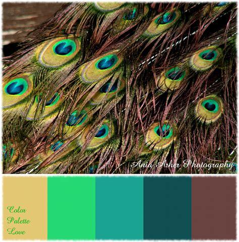 color peacock color palette peacock ania archer