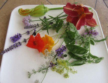 fiori commestibili elenco quali sono i fiori commestibili un elenco dei pi 249 comuni