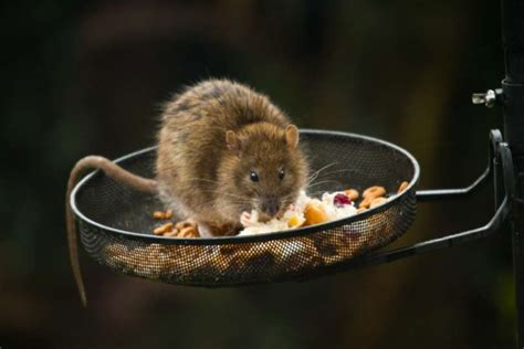 fill the feeder with the minimum amount of seed that birds