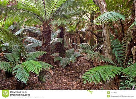 imagenes de animales y plantas de la selva helechos y plantas de la selva tropical fotos de archivo