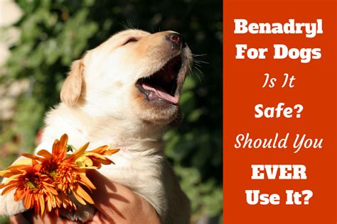 for dogs benadryl for dogs can you give it is it safe what dosage