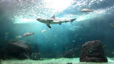 aquarium le guadeloupe le gosier aquarium des requins