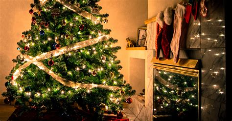 origin of the christmas tree bbc the rich history of traditions www frcblog entries howldb