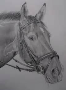 bild pferd tiere portrait natur von narnia bei kunstnet