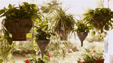 hanging planter basket 62 best hanging basket shade part sun images on