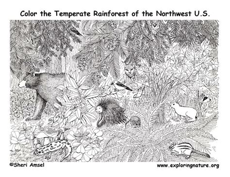 temperate rainforest coloring pages rainforest temperate coloring page