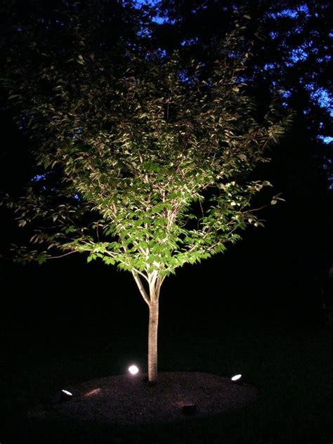 tree uplighting ideas lighting design ideas