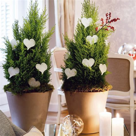 creative indoor plants decors for christmas amp new year