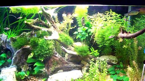 arredo acquario acquario dolce 200 litri con scalari rasbore neon e
