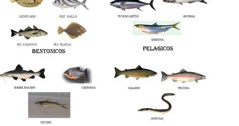 los peces de la 8483835460 gastronomia y sabor clasificaci 211 n peces