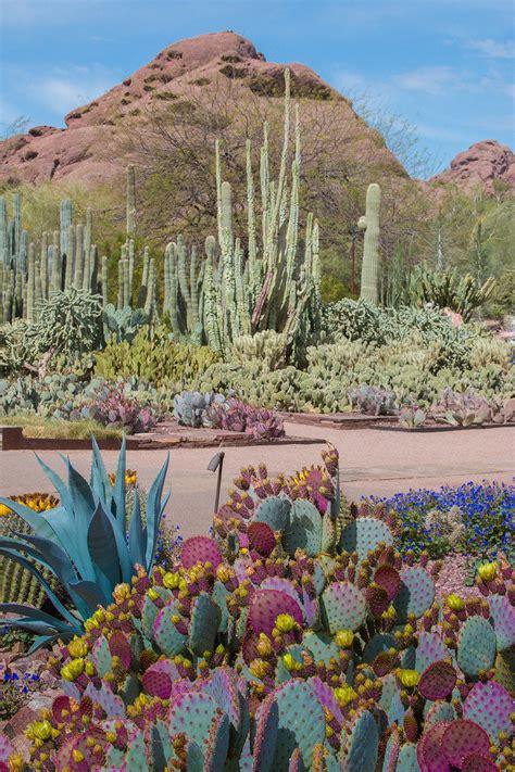 desert botanical garden events desert botanical garden offers wide variety of classes for