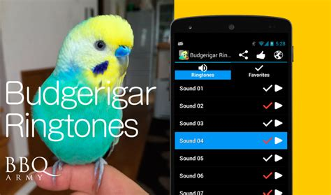 android ringtones get budgerigar ringtones for android i parakeets