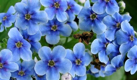 flower wallpaper nz blue flowers garden 8 background wallpaper