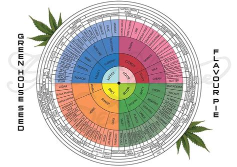 Weed Periodic Table What Are Cannabis Terpenes And What Do They Do