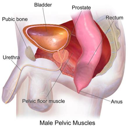 prostate health prostate symptoms learn  basics