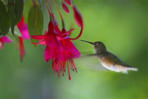annuals and perennials that attract birds to your yard csmonitor com