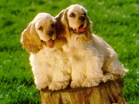 Sporting Puppies Pictures