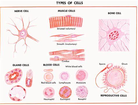 different types of viginal 161 jindetr 233 s sal de genomas y genes ii construyendo