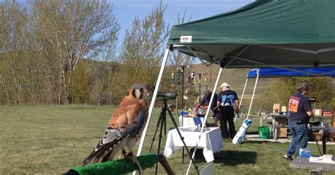 birding is fun boise bird festival idaho s pledge to