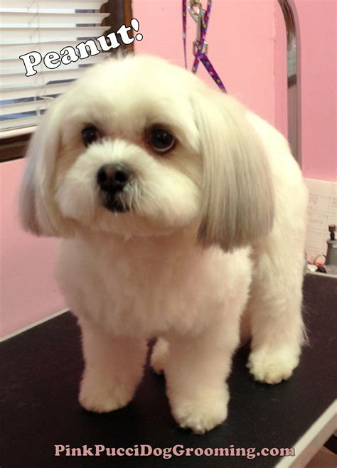 how to groom a shih tzu puppy cut lhasa apso haircut styles newhairstylesformen2014