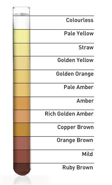 What Color Should Urine Be If Detoxing Mercury by Clue Is The Color Of Your Urine Pay Attention My