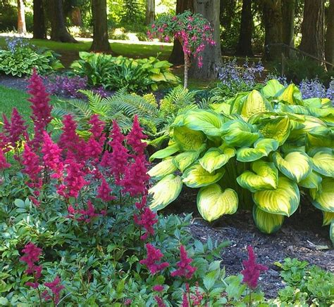 Patio Shade Plants by Shade Garden The Color Combos The Astilbes