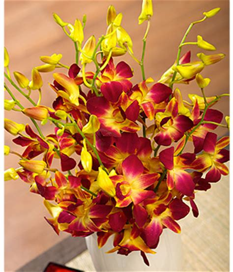benches co uk bunches co uk autumn oriental orchids fredo review