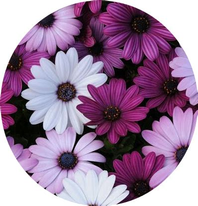 imagens tumblr flores tumblr flower flowers flores purple white blanco morado