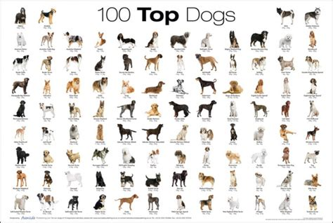 how many breeds of dogs are there all you need to about getting a home finding