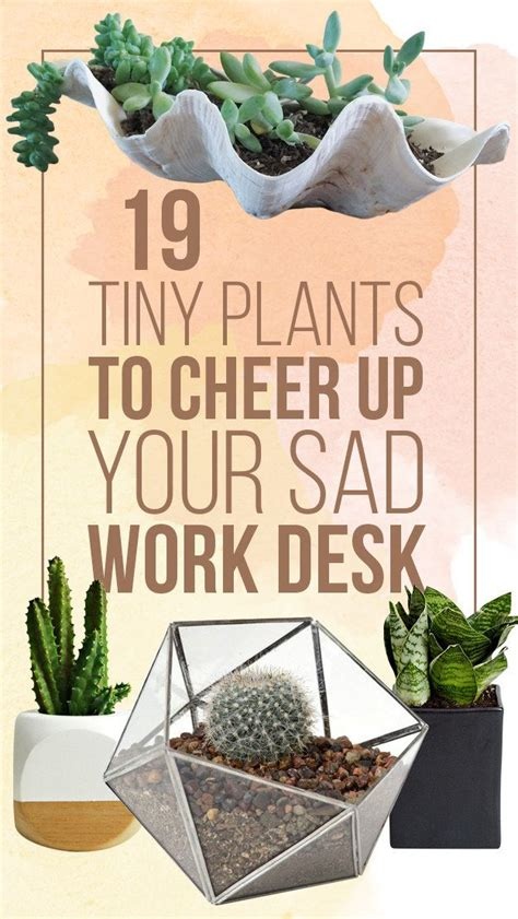 best desk plants fantastic best desk plants 12 for the office bloomberg