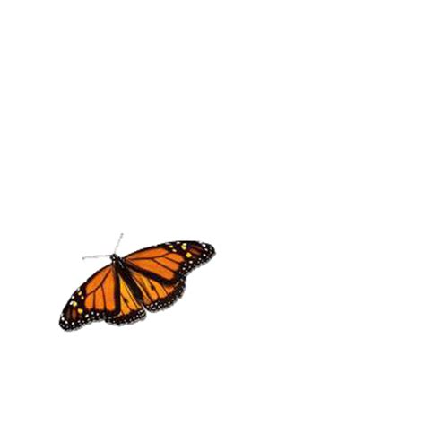 Animated Butterflies Gifs Quoteko Clipart Best Images Of Animated Butterflies