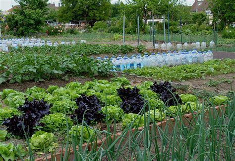 Image De Jardin by File Jardins Familiaux Tourcoing J7 Jpg Wikimedia Commons