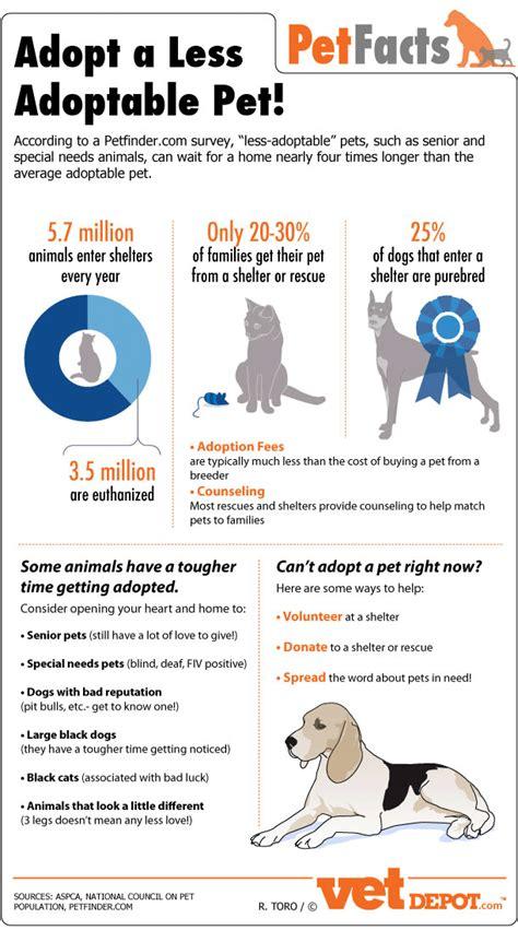 adopt  pet infographic vetdepotcom