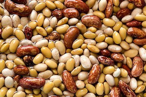 alimenti contengono proteine vegetali dove si trovano le proteine vegetali