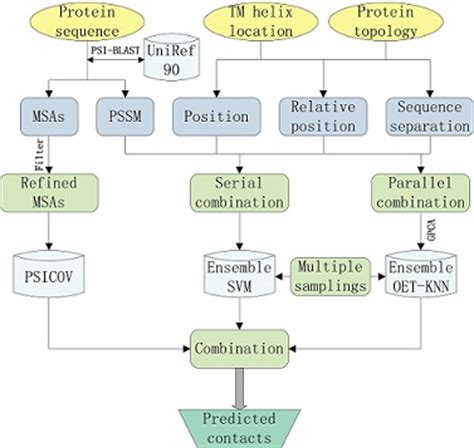 flowchart of how proteins are made in the cell membrain transmembrane protein structure prediction