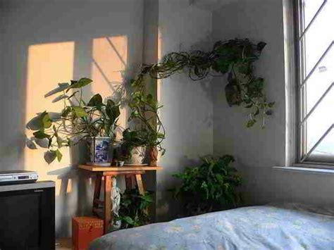 pflanzen für das schlafzimmer k 252 che schwarz hochglanz