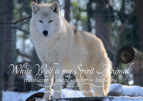 wolf symbolism meaning wolf spirit totem power animal