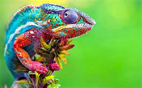 wallpapers of colorful animals colorful chameleon animal wallpaper 179 2880x1800