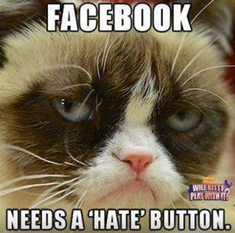 Mean Kitty Meme - mean cat meme breed image memes at relatably com