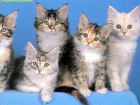 Imagenes Increibles De Gatos | fotos de gatos x