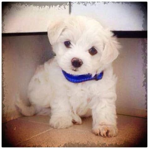 imagenes de perritos perritos bebes images reverse search