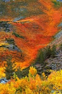 fall colors california california eastern fall foliage color photography