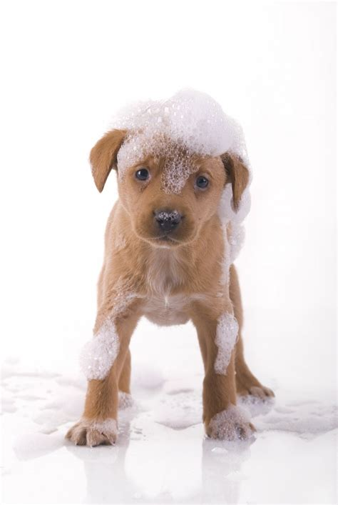bathing a puppy treating your pooch to a bath dogslife breeds magazine