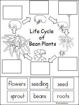 free printable animal life cycle worksheets life cycle of a bean plant free printable part of a