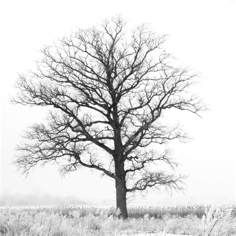 5x5 black and white tree print dreamy nature print