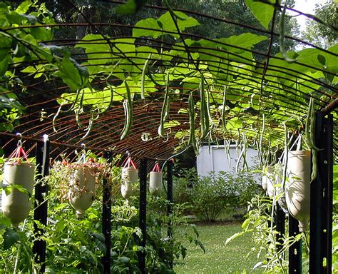 Cattle Panel Trellis article use cattle panels to build an arched trellis