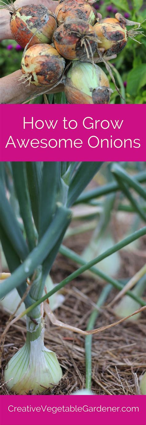 how to plant a vegetable garden in your backyard how to plant and grow onions in your vegetable garden