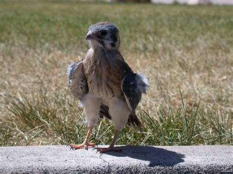40 best images about falcons nest on pinterest atlanta falcons football wall and blog 22 best images about falcons on pinterest peregrine